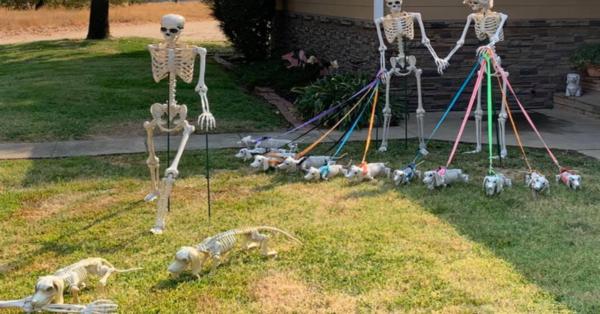 "Viral Photo Shows Dachshund Lover's Adorable ""Halloweenie"" Yard Decoration"