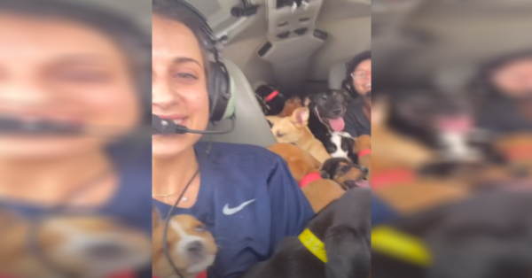Rescuers Fly Plane Packed With Puppies To Save Them From Euthanasia
