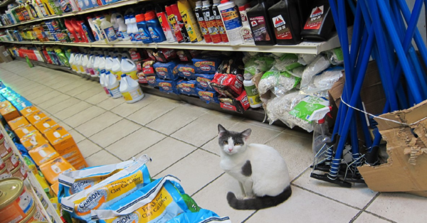 People Can't Get Enough Of The Bodega Cats On Social Media