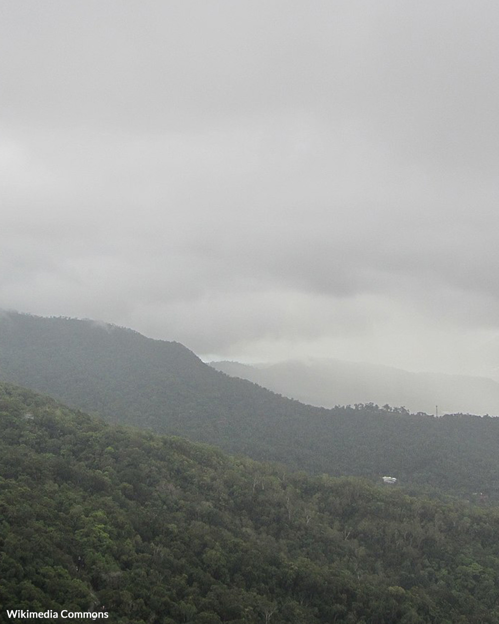 The Daintree Rainforest was handed over to the Eastern Kuku Yalanji by the Queensland government.