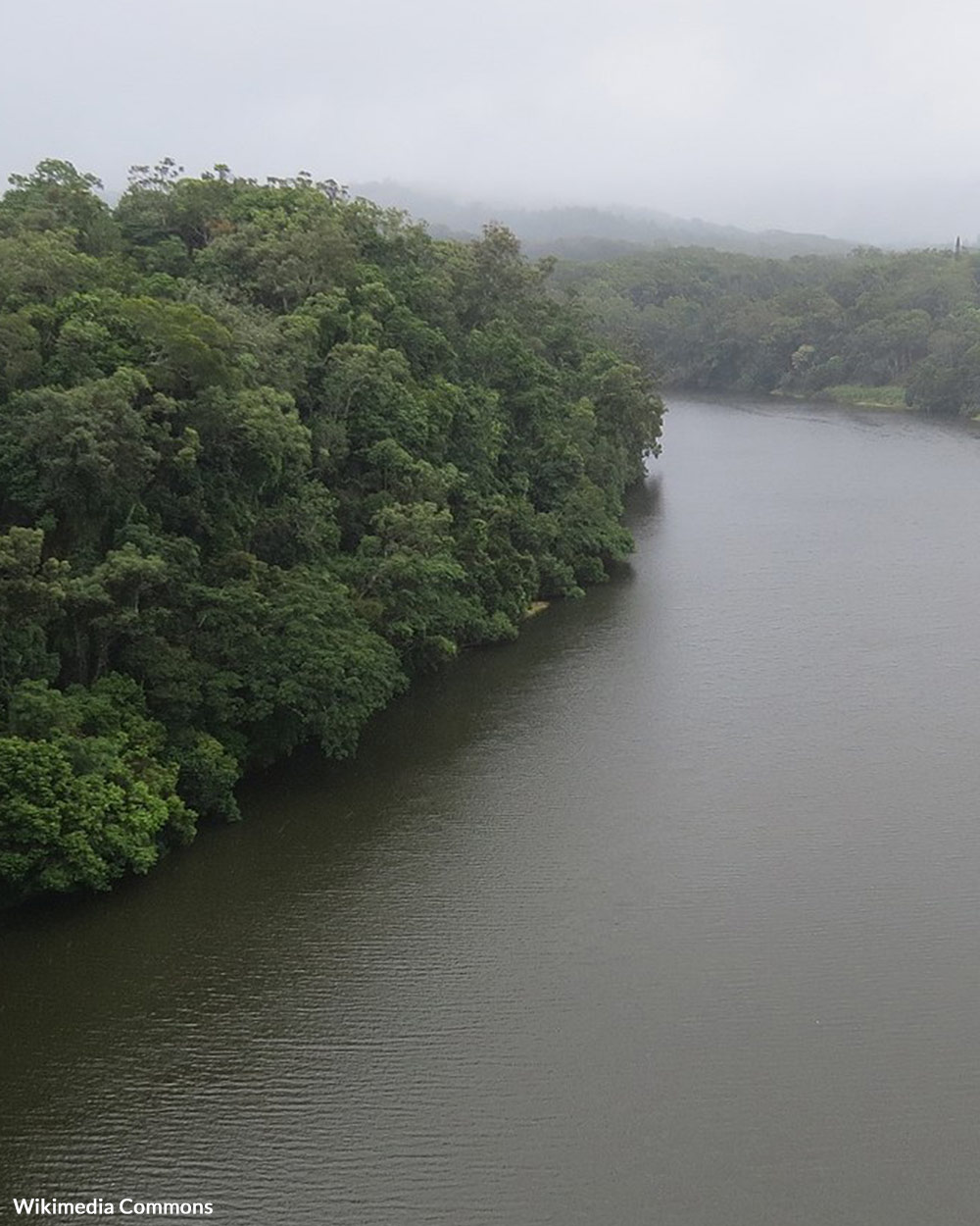 Aboriginal tribes have made their homes in this rainforest for tens of thousands of years.