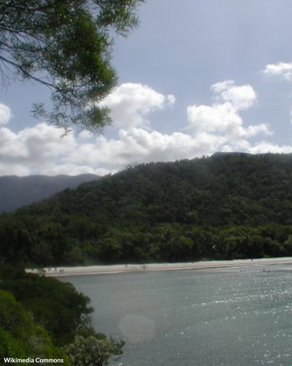 The Eastern Kuku Yalanji have plans to set up opportunities for tribal youth in these national parks.