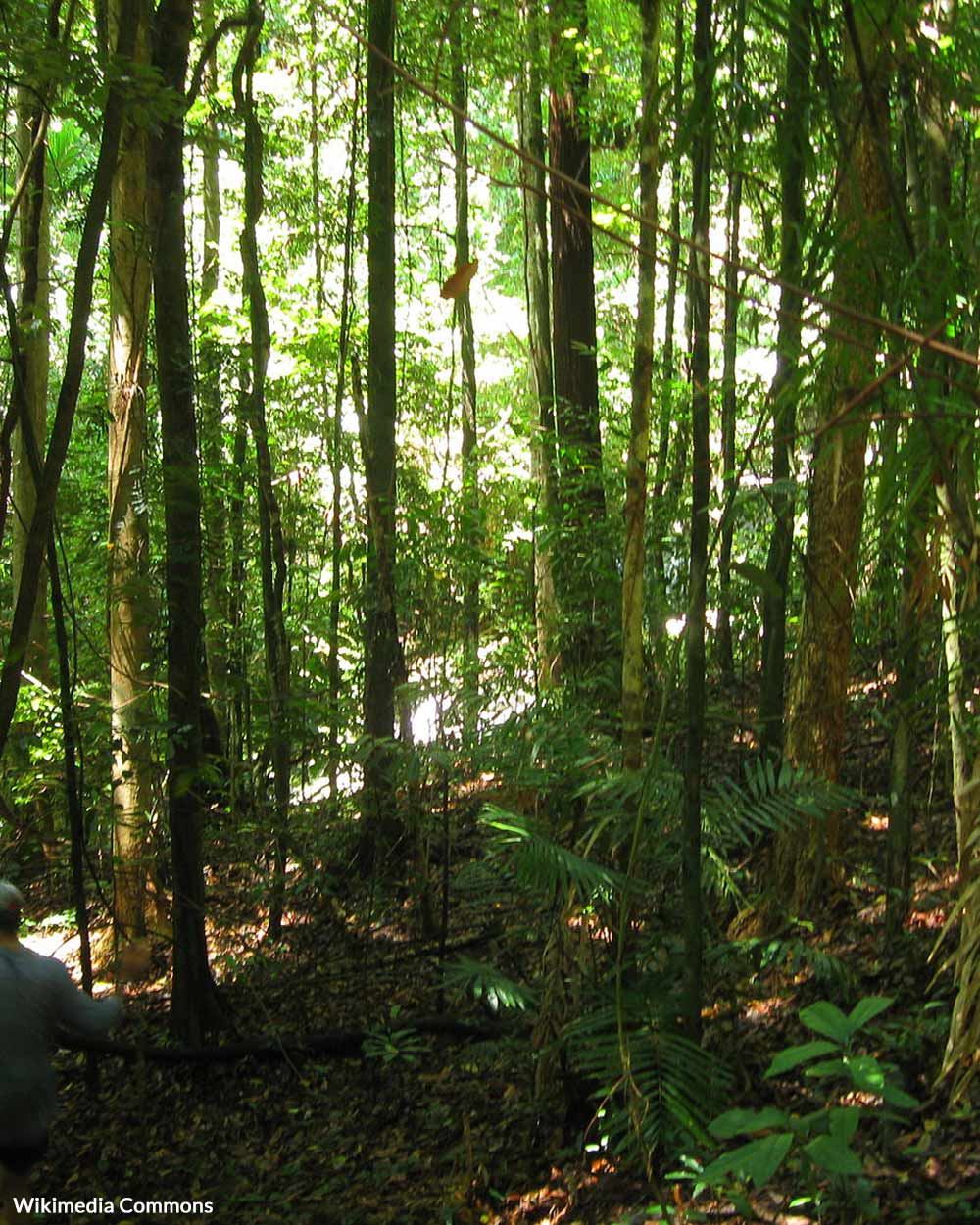 The Daintree Rainforest is a UNESCO World Heritage site.