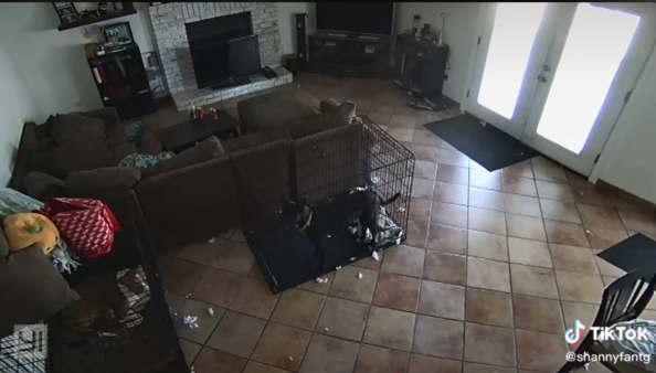 """""""Ghost"""" Removes Dog's Collar In Creepy Security Footage"""