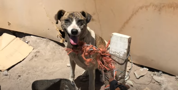 Dog Given Away To Cruel Home Gets Help From Kind-Hearted Kids