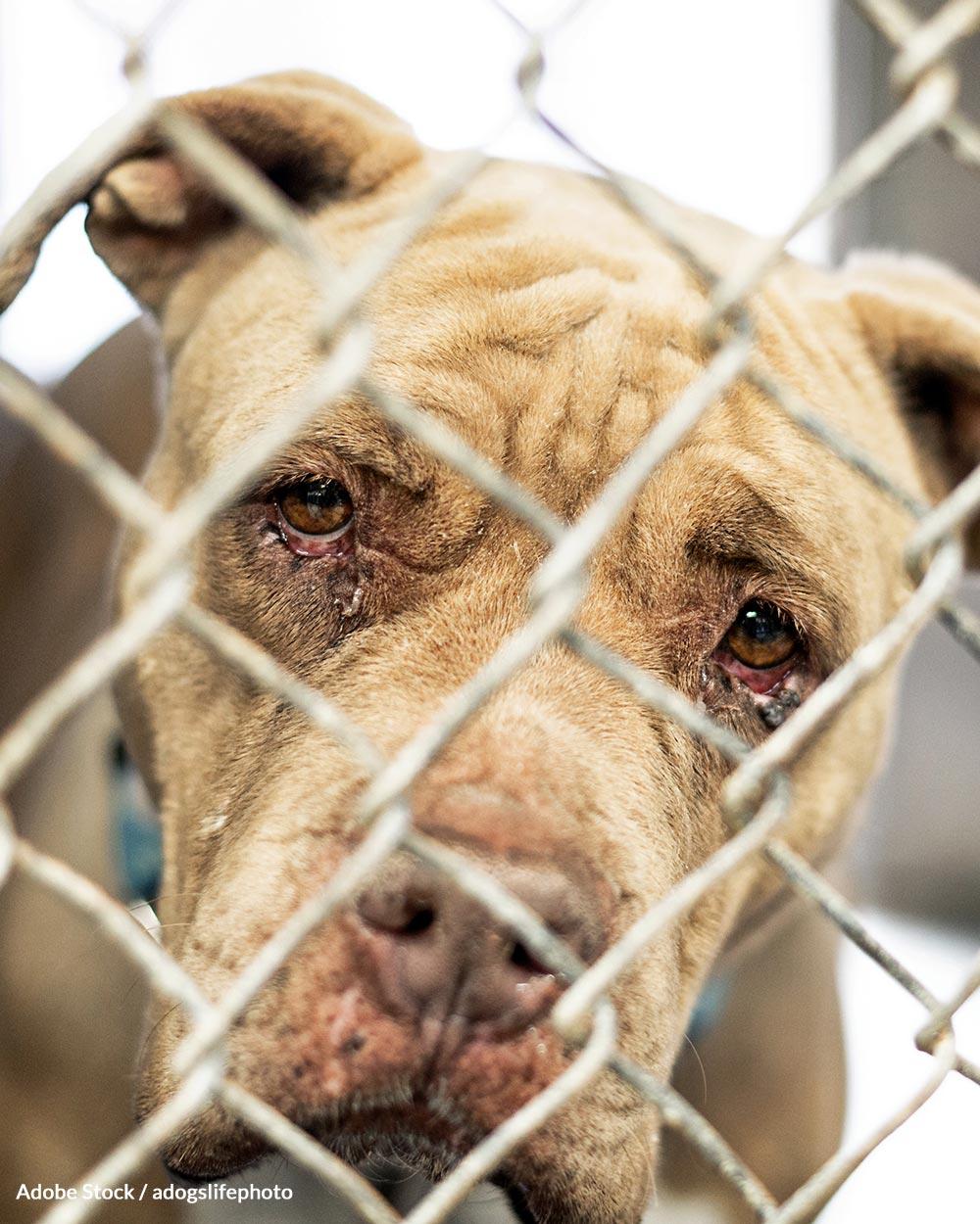 Take The Senior Pet Pledge And Change An Animal's Life