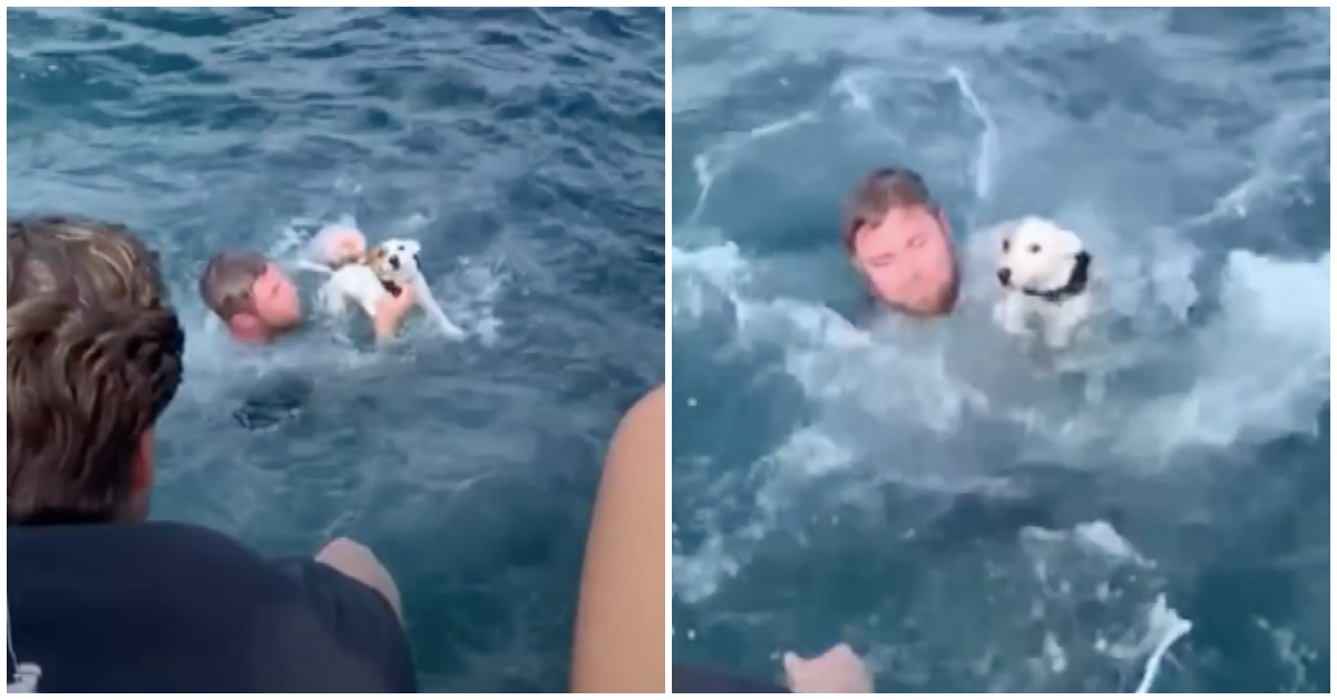 Boaters Save Drowning Dog After Spotting Him In Middle Of Ocean