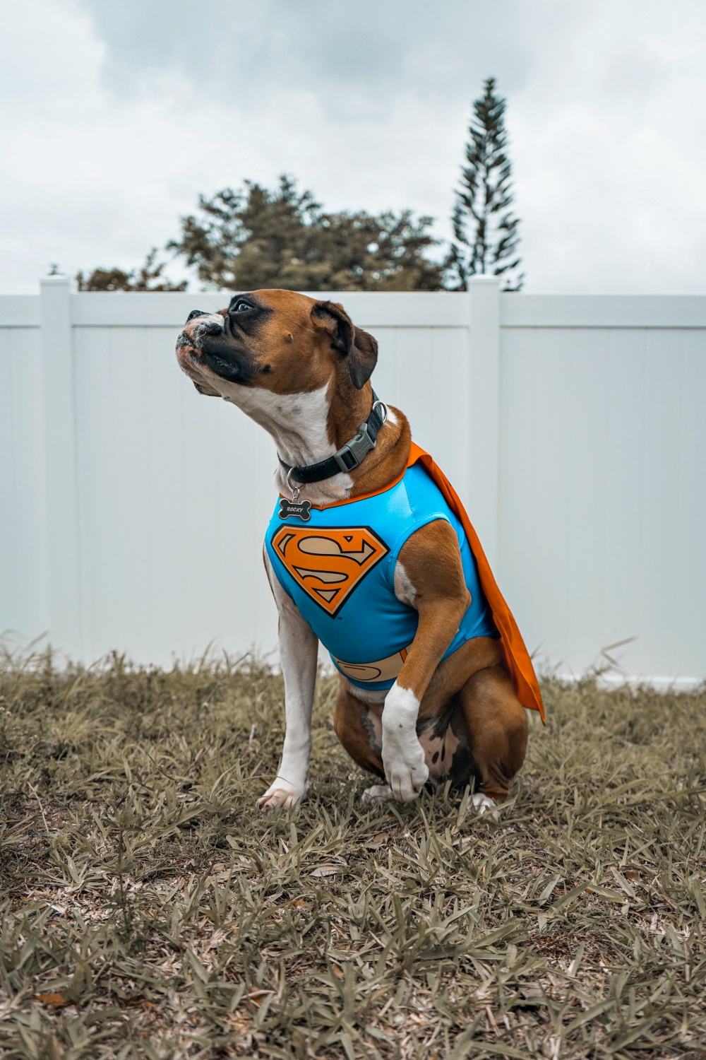 Nearly Half Of All Dog Parents Plan To Wear Matching Halloween Costumes With Their Dog, Survey Finds