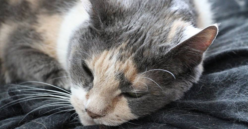 Stray Cat Rescued From the Elements During a Frigid Winter