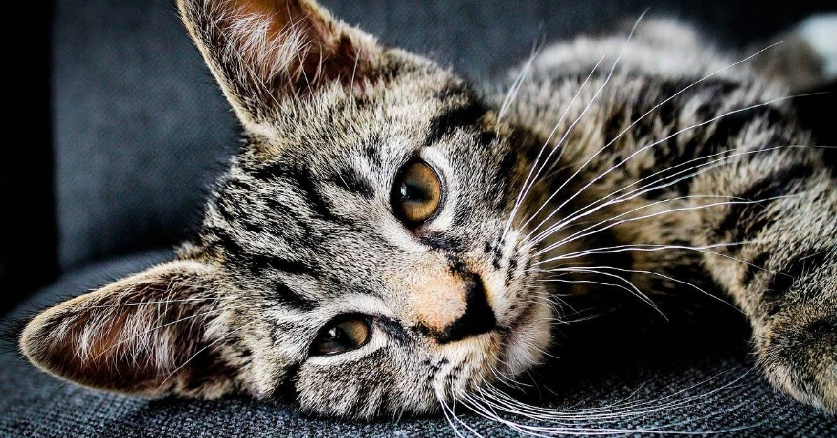 5 Ways To Save Lives On National Cat Day
